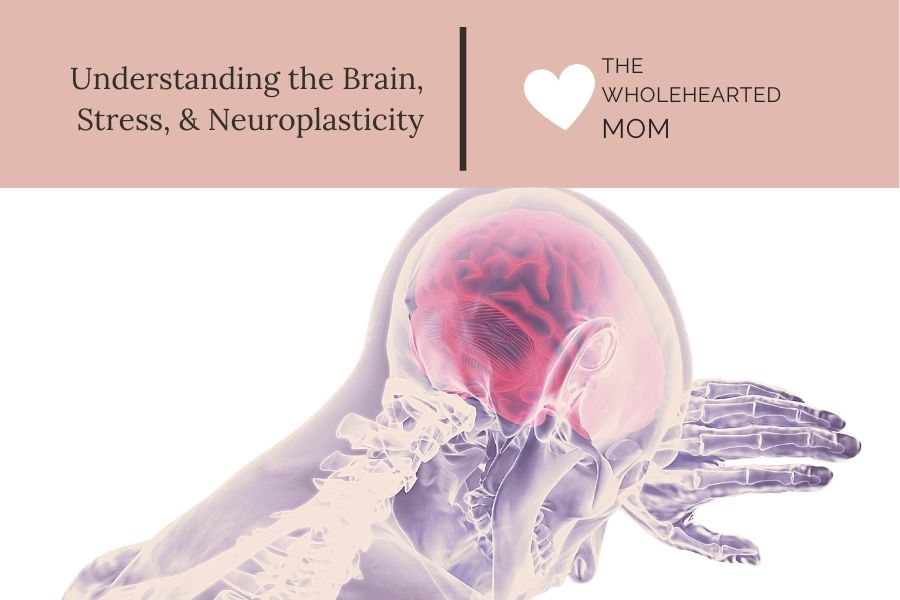 Understanding Stress the Brain and Neuroplasticity